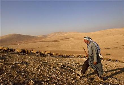 A Palestinian from the herding community of al Hadidya in the Jordan Valley herds livestock September 12, 2011. REUTERS/Darren Whiteside