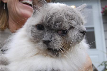 This undated handout image, obtained by Reuters on September 27, 2011, shows a Massachusetts cat with two faces that has become the world's longest surviving so called ''janus'' feline at 12 years of age. REUTERS/David Niles/Handout