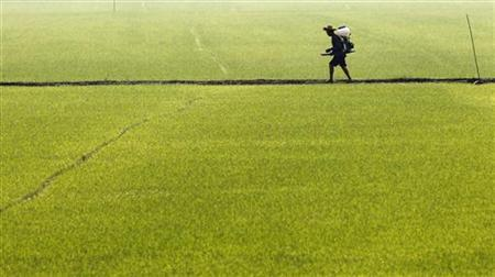 A farmer sprays pesticide in a paddy field in Bang-lane district of Nakhon Pathom provice in central rice areas of Thailand, February 3, 2012. REUTERS/Sukree Sukplang