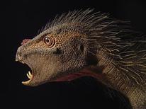 """<p>Une nouvelle espèce de dinosaure herbivore d'Afrique de la taille d'un chat et décrite comme un mélange entre """"un oiseau, un vampire et un porc-épic"""" a été identifiée aux Etats-Unis dans un rocher venu d'Afrique du Sud. /Photo prise le 3 octobre 2012/REUTERS/Tyler Keillor/Université de Chicago</p>"""