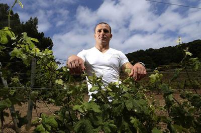 Italy's prison vineyards