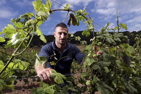 Italy's prison vineyards