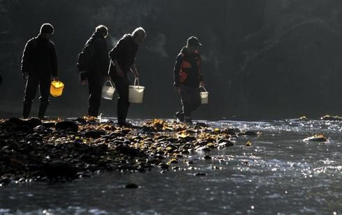 Returning salmon to the rivers