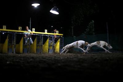 Greyhound racing in Chile