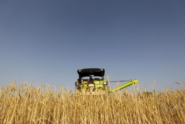 A combine harvester is used to harvest wheat in a field on the outskirts of Ahmedabad March 14, 2013. REUTERS/Amit Dave