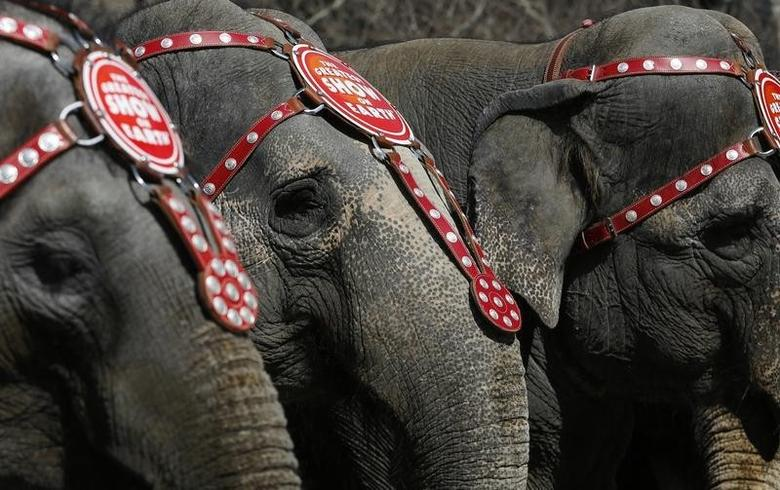 Elephants from the Ringling Bros. and Barnum & Bailey Circus line up for a photo under the Brooklyn Bridge in the Brooklyn Borough of New York, March 20, 2013. REUTERS/Brendan McDermid