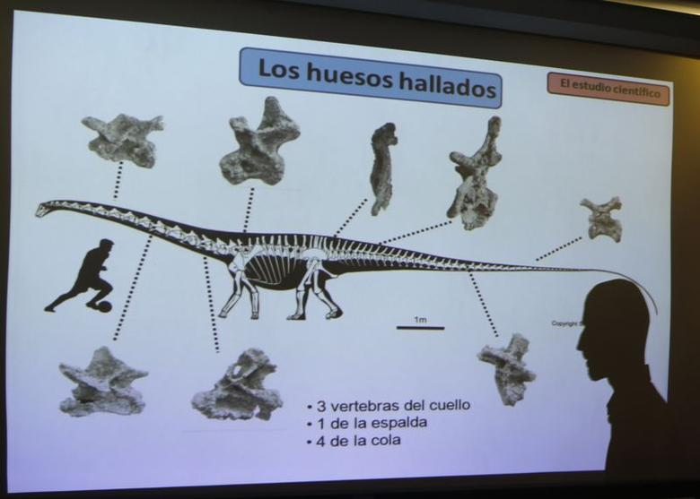 Argentine paleontologist Pablo Gallina casts a shadow on a projector screen showing the found bones of a newly identified South American dinosaur named Leinkupal laticauda in Buenos Aires May 15, 2014. REUTERS/Enrique Marcarian