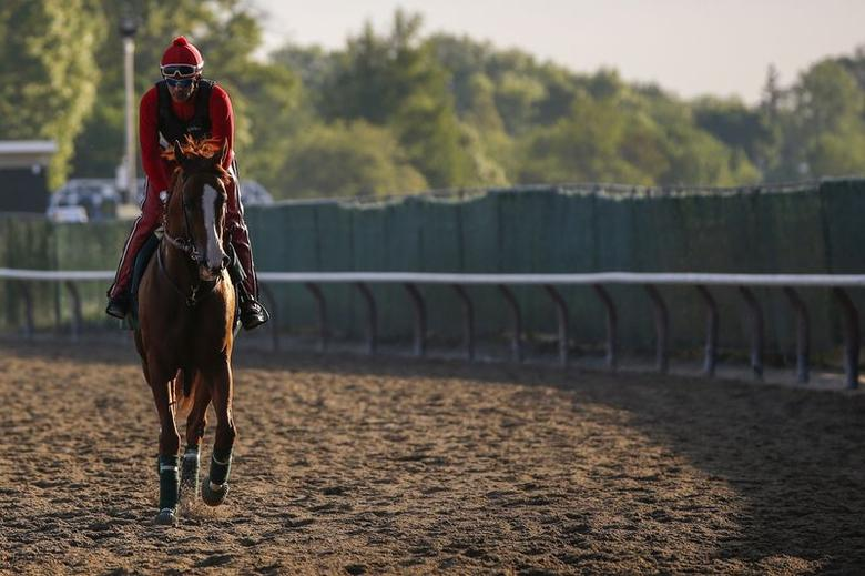 2014 Kentucky Derby and Preakness Stakes winner California Chrome jogs around the track during morning workouts at Belmont Park in Elmont, New York May 21, 2014.  REUTERS/Shannon Stapleton