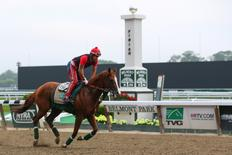 Jun 4, 2014; Elmont, NY, USA; California Chrome ridden by exercise rider Willie Delgado passes the finish line as they jog the track during workouts in preparation for the 2014 Belmont Stakes at Belmont Park. Anthony Gruppuso-USA TODAY Sports