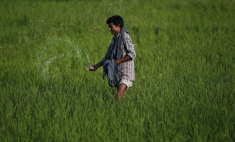 A Kashmiri farmer spreads fertiliser on a rice field on the outskirts of Srinagar June 22, 2011. REUTERS/Fayaz Kabli/Files