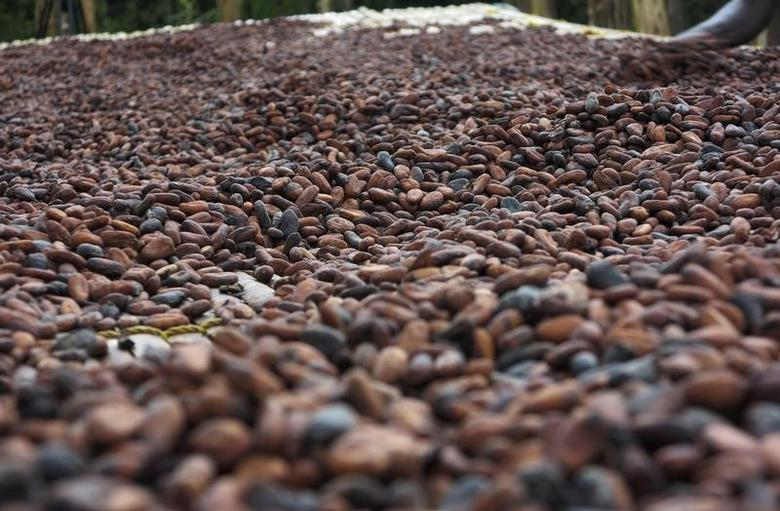 Cocoa beans are pictured in Ghana's eastern cocoa town of Akim Akooko September 6, 2012.   REUTERS/Kwasi Kpodo