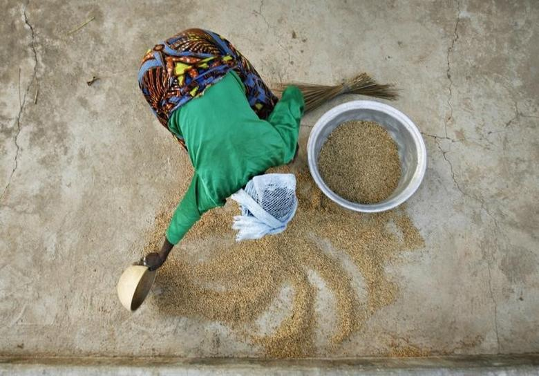 A woman from the Daborin Single Mothers Association gathers rice at a small processing plant in the northern Ghanaian town of Bolgatanga, February 1, 2008. REUTERS/Finbarr O'Reilly