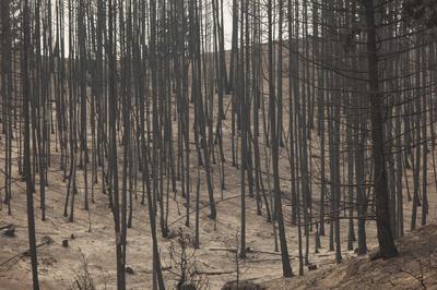 Crews gain ground on Washington state wildfire as...