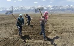 Uighur farmers hoe their farmlands to prepare for growing potatoes in Barkol Kazahk Autonomous county, Xinjiang Uighur Autonomous Region May 4, 2014. REUTERS/China Daily