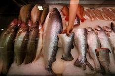 Норвежская рыба на рынке в Санкт-Петербурге 7 августа 2014 года. Крупнейший в мире производитель лосося норвежская Marine Harvest ожидает восстановления цен в конце года, когда эффект российского эмбарго сойдет на нет. REUTERS/Alexander Demianchuk