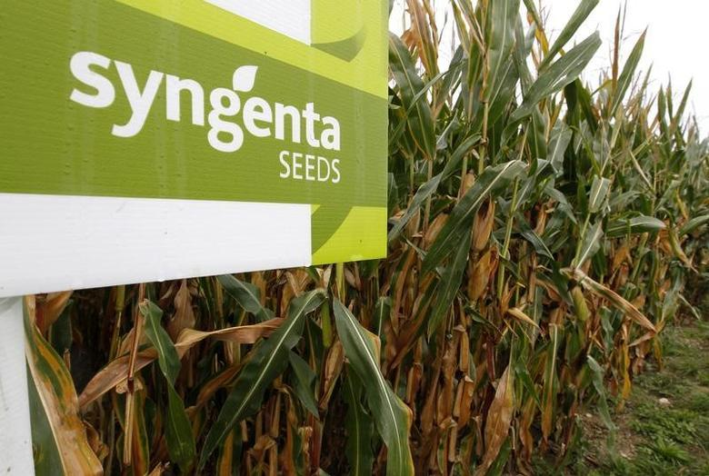 The logo of Swiss agrochemicals maker Syngenta is seen in front of a cornfield near the company's plant in Stein near Basel September 18, 2012.  REUTERS/Arnd Wiegmann