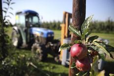 Яблоки на ферме в Камбре, Франция 3 сентября 2014 года. Европейская комиссия поддержит пострадавших от российских санкций европейских фермеров комплексом новых мер, в том числе 165 миллионами евро. REUTERS/Pascal Rossignol