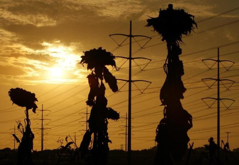 Withered sunflowers are silhouetted next to power lines in Carlsbad California as a heat wave strains the state's power grid July 24, 2006. REUTERS/Mike Blake