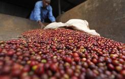 Trabalhador seleciona grãos de café em fábrica no Quênia. 24/07/2014 REUTERS/Thomas Mukoya