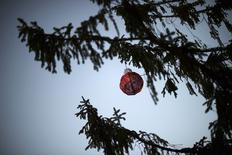 A lone red ball dangles from a 50-foot Norwegian pine, which has been described as Charlie Brown-esque, in Reading, Pennsylvania December 7, 2014. REUTERS/Mark Makela