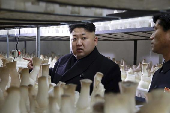 North Korean leader Kim Jong Un gives field guidance to the newly-built Pyongyang City Mushroom Farm in this undated photo released by North Korea's Korean Central News Agency (KCNA) in Pyongyang January 10, 2015. REUTERS-KCNA