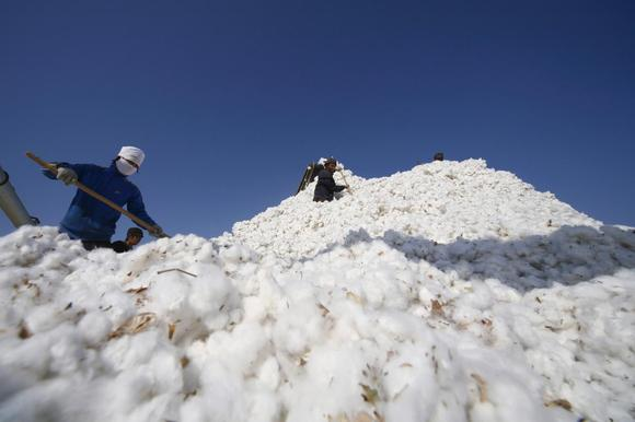 Farmers stack cotton at a cotton purchase station in Hami, Xinjiang Uighur Autonomous Region in this November 3, 2010 file picture. REUTERS/Stringer/Files