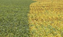 Plantação de soja na cidade de Primavera do Leste. 07/02/2013 REUTERS/Paulo Whitaker