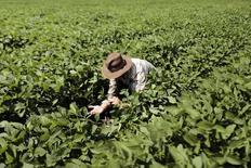 Un granjero revisa su cosecha de soja en Barreiras, Brasil, feb 6 2014. Las fábricas, granjas y empresas de servicios de Brasil cerraron 81.774 empleos netos en enero, dijo el viernes el Ministerio del Trabajo, en la más reciente señal de que el otrora pujante mercado laboral del país está perdiendo impulso rápidamente.  REUTERS/Ueslei Marcelino
