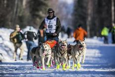 Alex Buetow's team charges down the street beyond the start gate during the official restart of the Iditarod dog sled race in Willow, Alaska, March 2, 2014.  REUTERS/Nathaniel Wilder