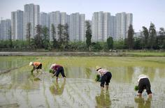 Farmers plant rice seedlings in a field near a residential compound in Shaxi township, Guangdong province March 29, 2015. REUTERS/Stringer