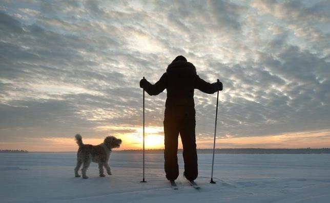 4月16日、日本の科学者チームは、犬と人間が交流するとき、とりわけお互いの目を見つめ合うときに、人間の赤ちゃんと親の絆を強める効果がある「オキシトシン」が増加することを突き止めた。写真は先月オンタリオで撮影(2015年 ロイター/Fred Thornhill )