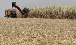Cana-de-açúcar é colhida em plantação em Valparaíso. 18/09/2014 REUTERS/Paulo Whitaker