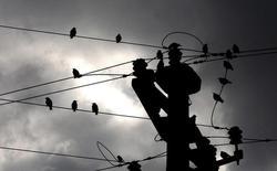 """Воробьи на проводах ЛЭП в Скопье. 24 октября 2005 года. Крупнейший владелец энергоактивов в РФ Газпром ждет роста производства электроэнергии в текущем году у своих """"дочек"""", несмотря на стагнацию спроса в стране, прогнозирует удорожание инвестпрограммы из-за валютных скачков и высоких цен на импортное оборудование. REUTERS/Ognen Teofilovski"""