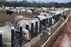 Bovinos em cercado após serem transportados de fazendas na bacia amazônica e antes de serem levados a um porto, em Moju, no Pará. 07/11/2013 REUTERS/Paulo Santos