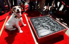 """El perro Uggie, del filme """"The Artist"""", tras marcar sus patas frente al teatro chino de Hollywood, jun 25 2012. Uggie, el energético Jack Russell terrier que cautivó corazones cuando apareció en la película muda ganadora de varios Oscar """"The Artist"""", murió en Los Ángeles con 13 años, dijo el miércoles su propietario.   REUTERS/Mario Anzuoni"""