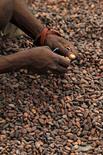 Un trabajador secan unos granos de cacao en Goin Debe, Costa de Marfil, ago 17, 2015. Los futuros del cacao en Nueva York subieron más de un 2 por ciento el martes, tras una racha de dos semanas de descensos, con el mercado de Londres liderando el camino por el apoyo de la débil libra esterlina, mientras el azúcar sin refinar perdió más de un 3 por ciento en una ola de ventas de última hora.  REUTERS/Luc Gnago