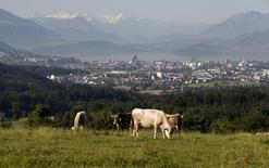 Cows stand on a meadow with the Swiss town of Zug, Switzerland with the Swiss Alps in the background in this August 2, 2013 file picture. REUTERS/Arnd Wiegmann/Files