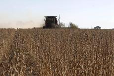 Plantação de grãos na cidade de Chacabuco, Argentina.  24/04/2013       REUTERS/Enrique Marcarian