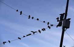Unas palomas descansando sobre unos postes de alta tensión en Chilpancingo, México, oct 25, 2014. La inflación de México a tasa anual moderó su avance más de lo previsto hasta la primera mitad de noviembre, a un nuevo mínimo histórico de 2.27 por ciento pese a una depreciación de la moneda, según datos del instituto de estadísticas divulgados el martes. REUTERS/Henry Romero