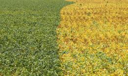 Plantação de soja em Primavera do Leste, Mato Grosso.    07/02/2013     REUTERS/Paulo Whitaker