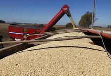Un cargamento de soja en Chacabuco, Argentina, abr 24, 2013. El nuevo Gobierno de Argentina flexibilizó el lunes el proceso de importación de soja para su procesamiento y posterior exportación, una medida con la que busca impulsar la molienda y las ventas externas del principal proveedor mundial de aceite y harina de la oleaginosa.           REUTERS/Enrique Marcarian