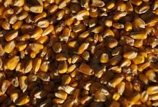 Зерна кукурузы на предприятии DeLong Company в Минуке, Иллинойс, 24 сентября 2014 года. Россия с 15 февраля запрещает ввоз из США кукурузы и сои, сообщила Рейтер представитель Россельхознадзора в среду. REUTERS/Jim Young