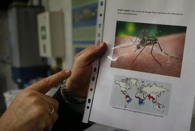 A scientist shows a picture of Aedes aegypti mosquitoes inside the International Atomic Energy Agency's (IAEA) insect pest control laboratory in Seibersdorf, Austria, February 10, 2016.    REUTERS/Leonhard Foeger