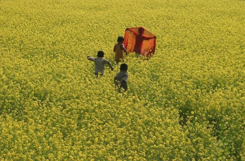 Children play in a mustard field at Mohini village, about 190 km (118 miles) south of Siliguri, December 6, 2007. REUTERS/Rupak De Chowdhuri/Files