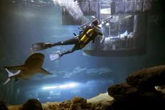 A diver takes pictures as people look at sharks from an underwater room structure installed in the Aquarium of Paris, France, March 14, 2016.  REUTERS/Charles Platiau