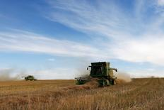 Farmers drive combines harvesting canola while harvesting on Barry Lang's farm near Beiseker, Alberta, September 27, 2013. REUTERS/Todd Korol