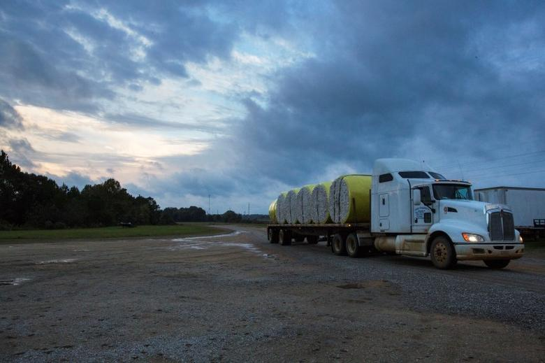 A truck delivers round modules of cotton to be ginned at the farmer-owned Milstead Farm Group gin in Shorter, Alabama October 26, 2015.  REUTERS/Brian Snyder