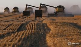 Комбайны на поле пшеницы к юго-западу от Красноярска 27 августа 2015 года. Минсельхоз РФ подтвердил прогноз урожая зерновых в 2016 году в 106 миллионов тонн несмотря на ухудшение погоды в последние дни, сообщила журналистам пресс-служба министерства. REUTERS/Ilya Naymushin