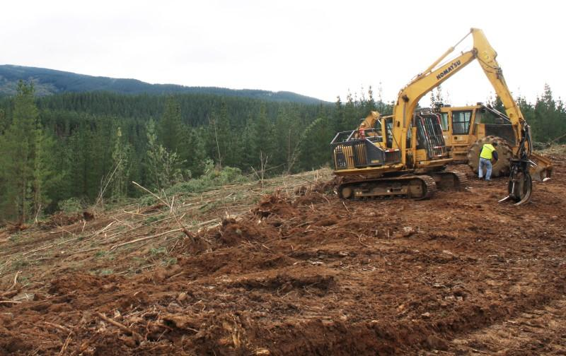 logging industry jobs in chiles forests shadowy rebel groups threaten logging industry