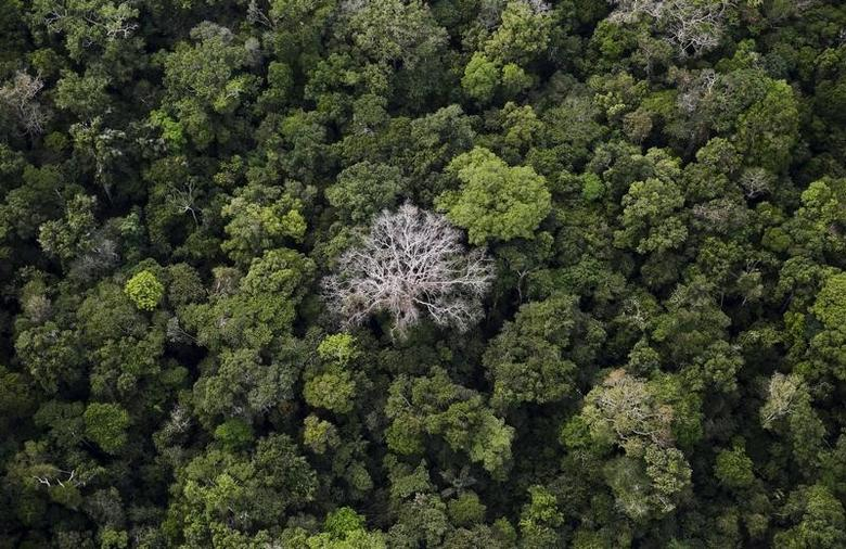 An aerial view shows the Amazon rainforest at the Bom Futuro National Forest near Rio Pardo in Porto Velho, Rondonia State, Brazil, September 3, 2015. REUTERS/Nacho Doce/Files